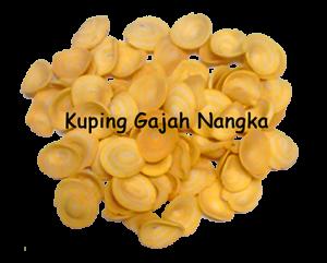 kuping gajah nangka